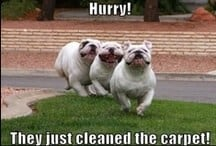 funny carpet cleaning image