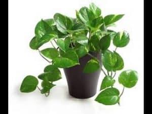 clean plant clean home